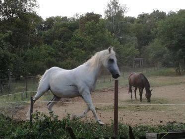 lovaselet–termeszetkozeli-szennyviztisztitas